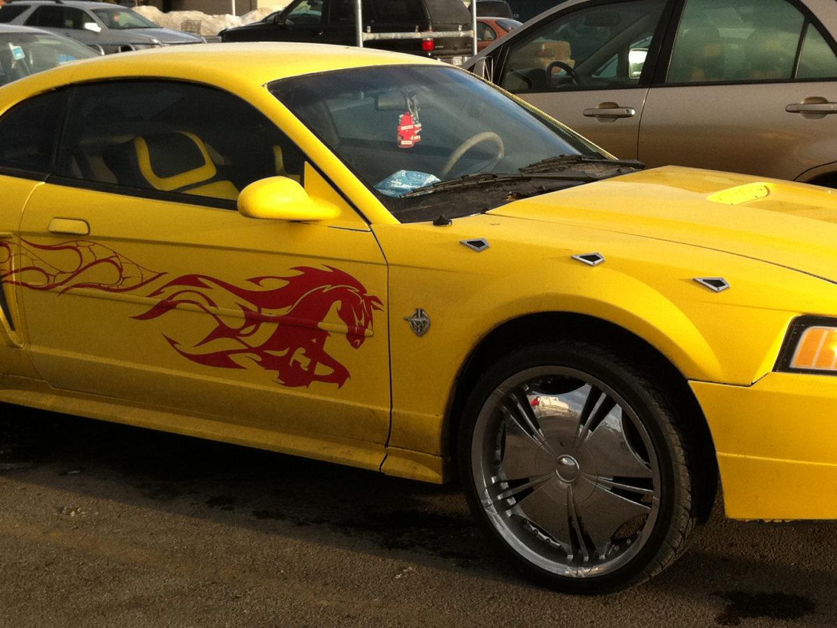 Gay Horse Ricer Mustang Fail Car Side
